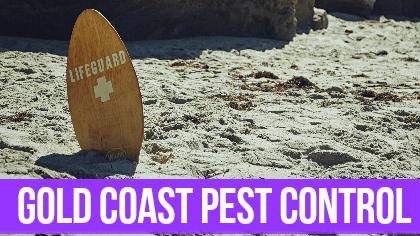 Gold Coast Pest Control